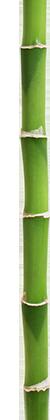 bambou420px